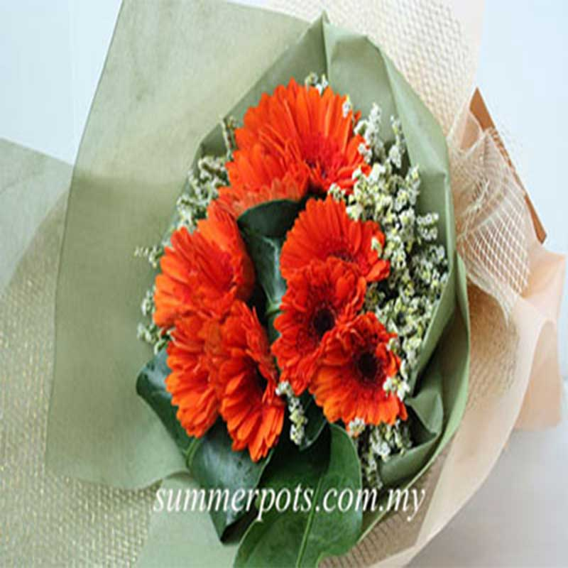 Gerbera Bouquet 260